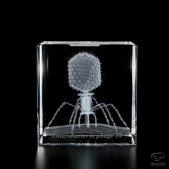 ミクロの生物のかたちの不思議を、5センチの透明なキューブにとじこめました。顕微鏡写真を基にミクロ生物を3Dモデリングし、ガラスキューブにレーザー彫刻。